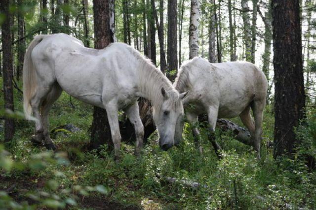 Zdjęcia: Góry Sajany, ., ROSJA