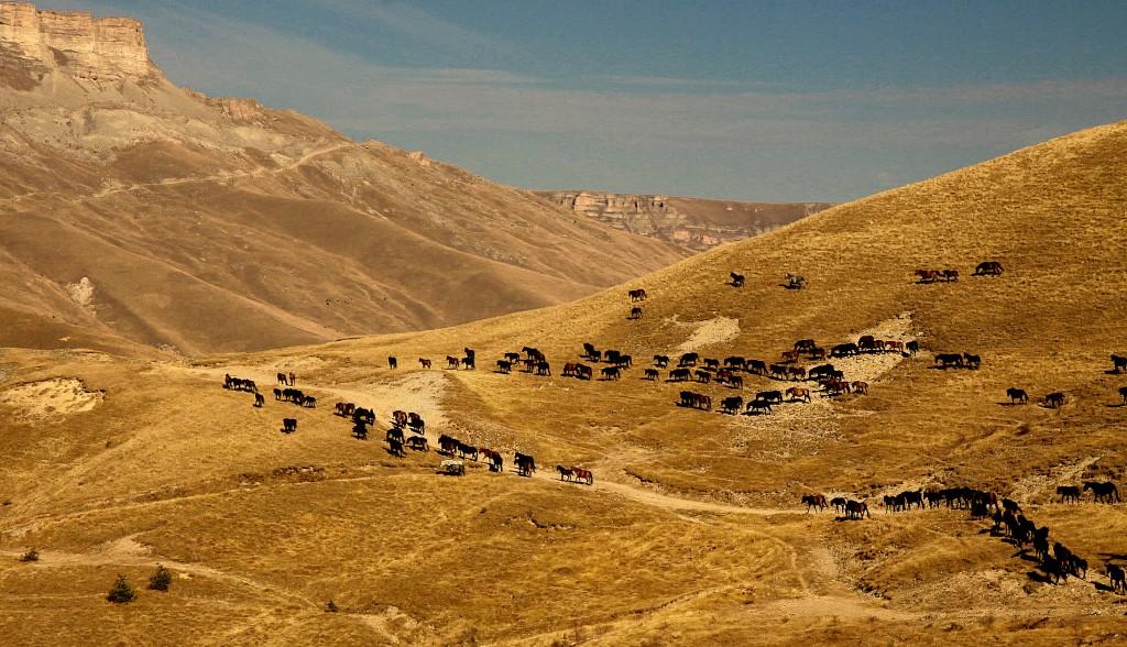 Zdjęcia: ok. doliny Baksanu, Płn. Kaukaz, Pastwiska Kaukazu..., ROSJA