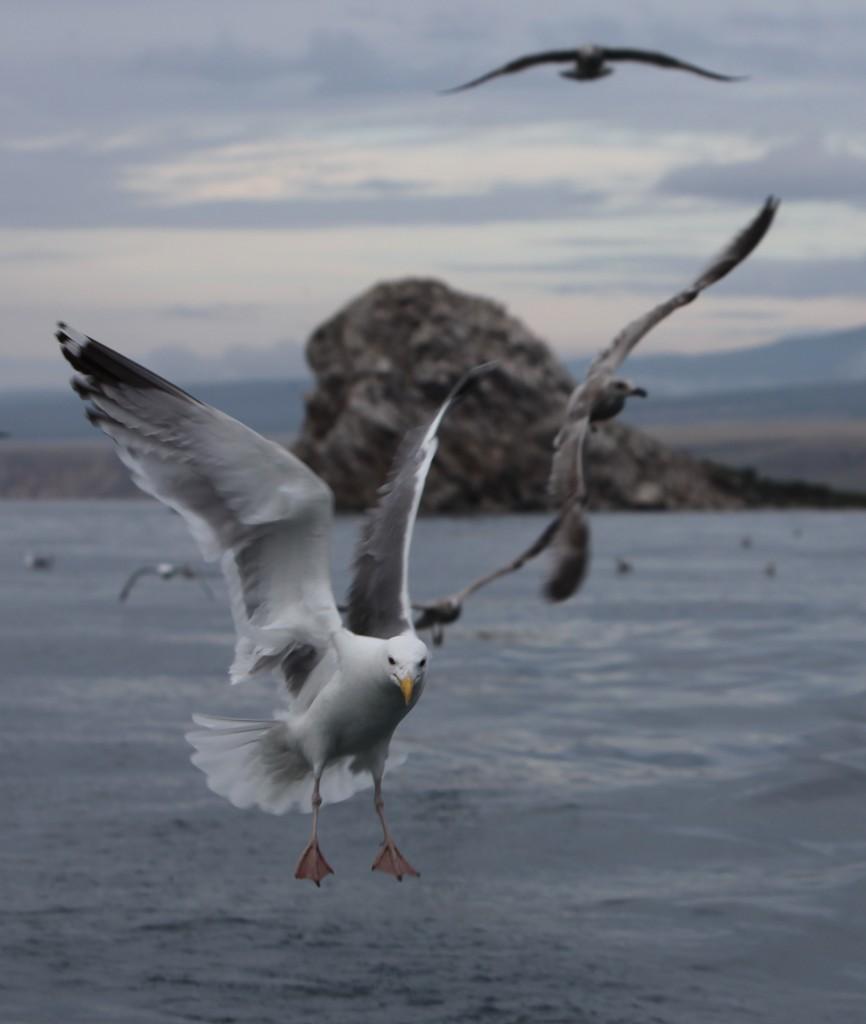 Zdjęcia: Olchon, Bajkał, Uwaga, ląduję, ROSJA