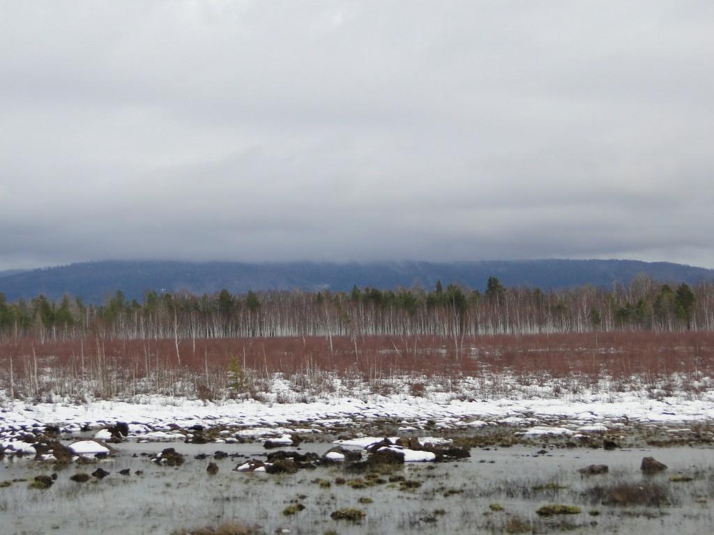 """Zdjęcia: ..Syberia, Syberia, Syberyjskie brzozy-KONKURS """"Tam wrócę"""", ROSJA"""