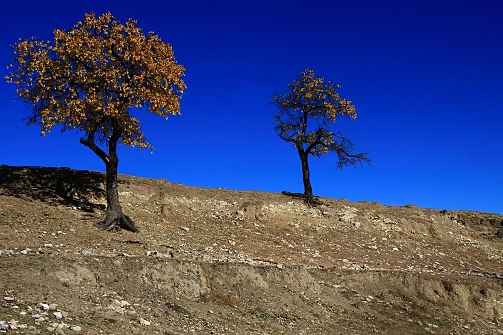 Zdjęcia: Dagestan, płn. Kaukaz, Opierając się górskim wiatrom..., ROSJA