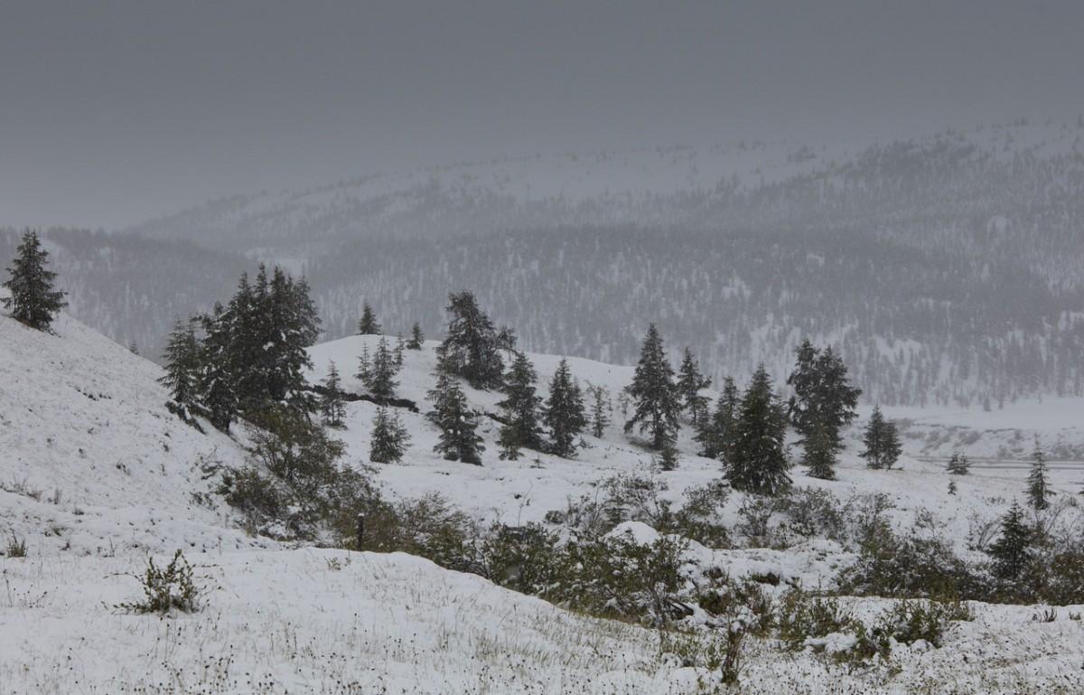 Zdjęcia: Góry Momskie, Jakucja ( republika Sacha ), Jakucki lipiec, ROSJA