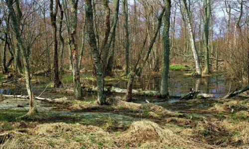 ROSJA / Obwód Kaliningradzki / Morskoje / Mokradła 3