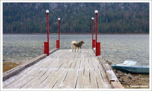 ROSJA / Republika Altajska / Artybasz / Nasz pies przewodnik