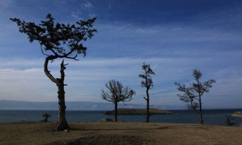 ROSJA / Bajkał / Wysopa Olchon / Drzewa