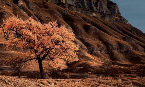 Zdjęcie ROSJA / płn. Kaukaz / w drodze do Kubaczi / Jesień w Dagestanie...