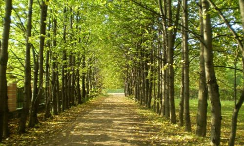 Zdjecie ROSJA / moskwa / muzeum kuskowo / rosjanie też mają piękną jesień