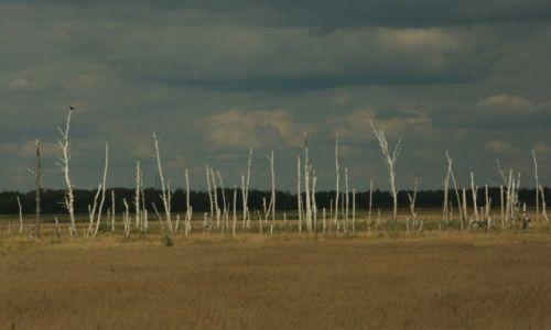 Zdjęcie ROSJA / Jakucja / w drodze / Drzewa umierają stojąc...