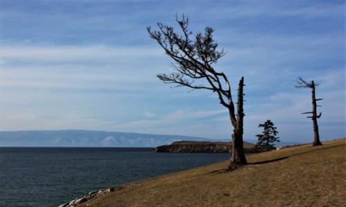 Zdjęcie ROSJA / Bajkał / Wyspa Olchon / Sosny