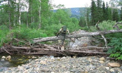 Zdjęcie ROSJA / Kuznieckij Ałatał / gdzieś w górach / małpi gaj