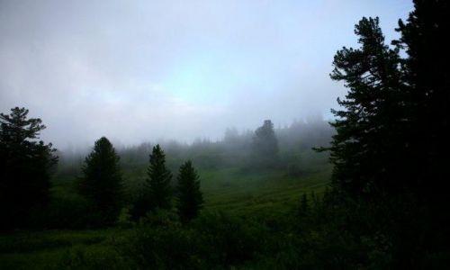 Zdjęcie ROSJA / Syberia, Sajany Wschodnie / 280km od cywilizacji / syberyjski las deszczowy