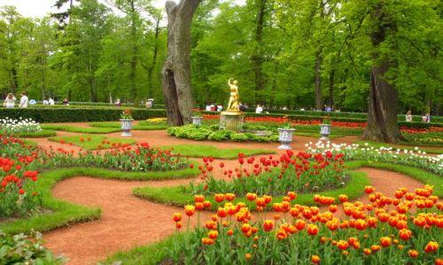 Zdjecie ROSJA / Petersburg / Peterhof / Czas na spacer
