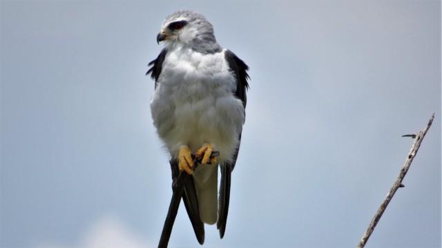 Zdjęcia: Dinokeng Game Reserve, Kaniuk, RPA
