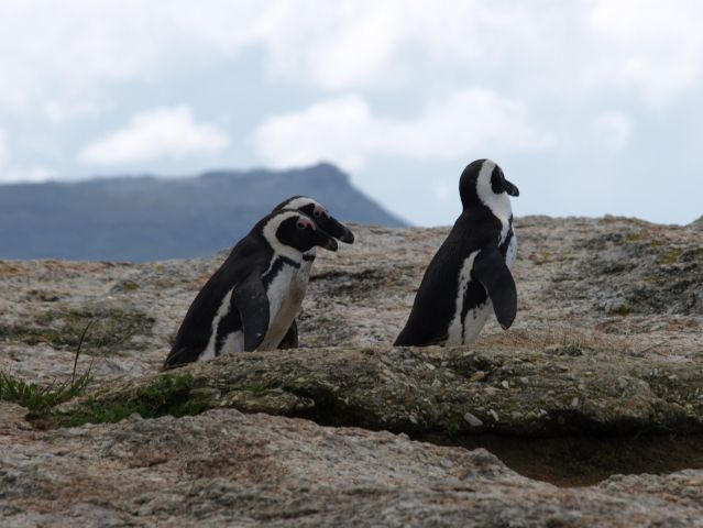 Zdjęcia: Cape Town, koniec świata, .. z rodzinką..., RPA