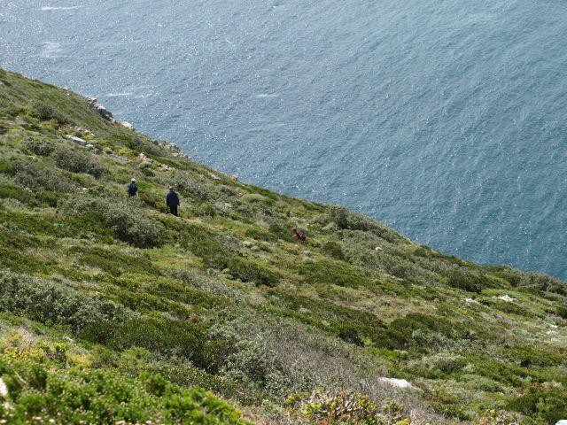 Zdj�cia: Cape Point, Cape Point, stromo, RPA