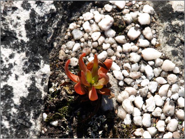 Zdjęcia: na szczycie, Kapsztad, roślinka, RPA