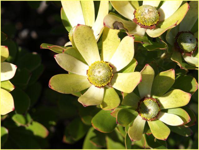 Zdjęcia: na szczycie, Kapsztad, inne roślinki, RPA