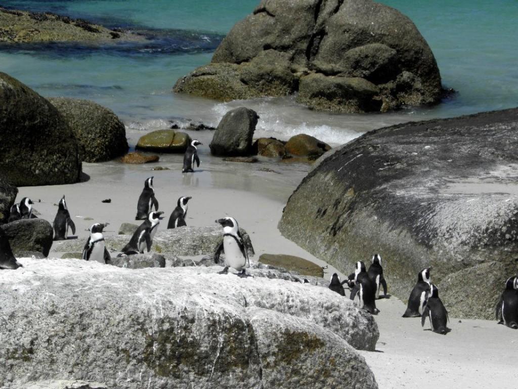 Zdjęcia: Simonstad, RPA, Pingwiny afrykańskie, RPA