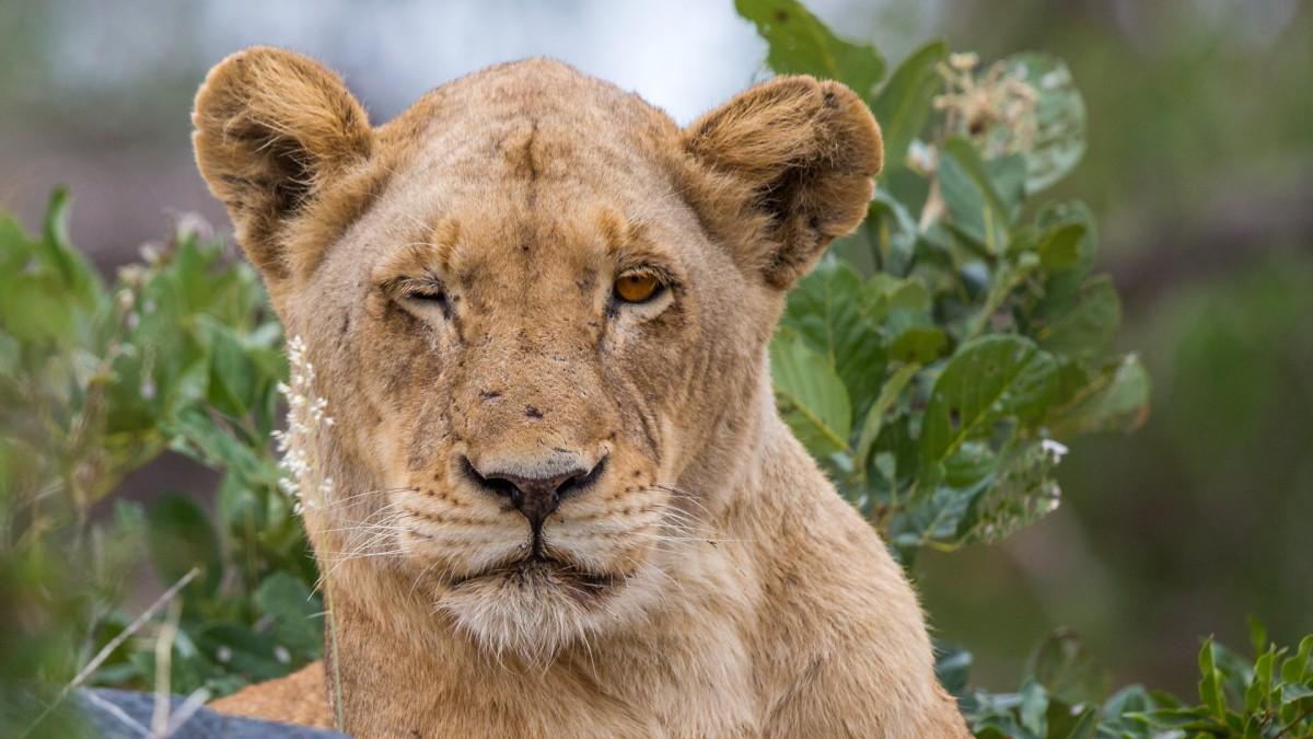 Zdjęcia: Hamiltons Camp, Kruger, Gdy dziewczyna puszcza oko ..., RPA