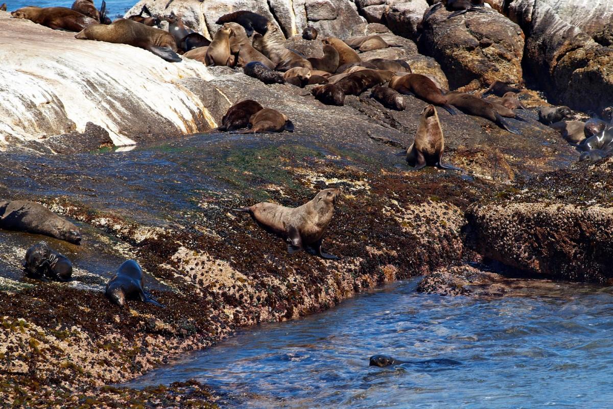 Zdjęcia: RPA, Wyspa fok, RPA