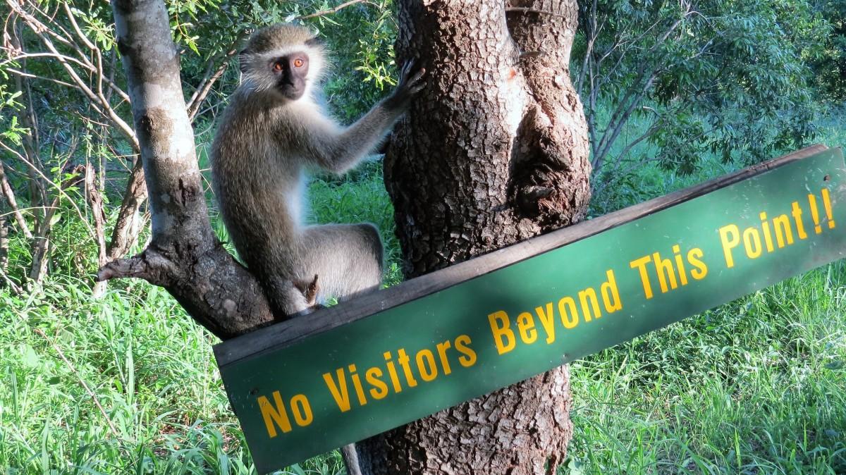 Zdjęcia: PN Krugera, Tu jestem bezpieczna (werweta), RPA