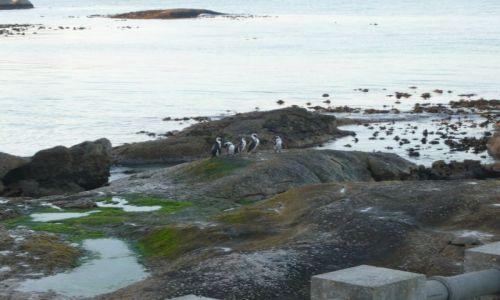 Zdjecie RPA / - / zatoka pingwinów / simon