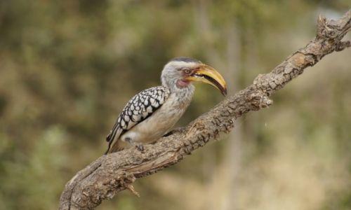 Zdjęcie RPA / Mpumalanga / Park Krugera / Toko