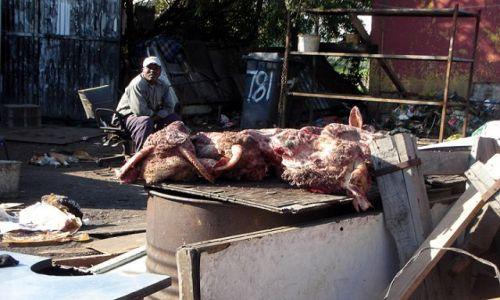 Zdjecie RPA / brak / slamsy kapsztadu / mięsny