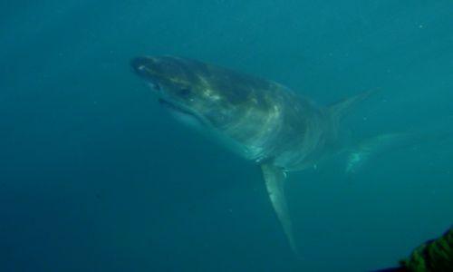 Zdjecie RPA / Cape Town / Aleja Rekinów  / Szybkość 40km/H (nie uciekniesz )