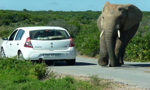 Zdjecie RPA / Eastern Cape / Addo / Spotkanie