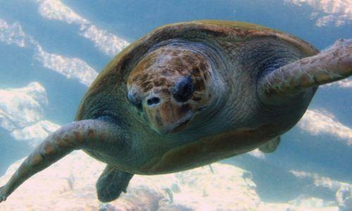 Zdjęcie RPA / Durban / Akwarium Morskie / Ziółwik