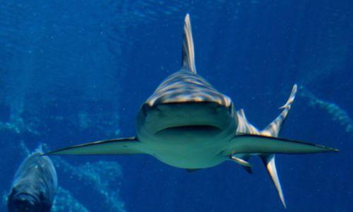 Zdjęcie RPA / Durban / Akwarium Morskie / Szczęki 7
