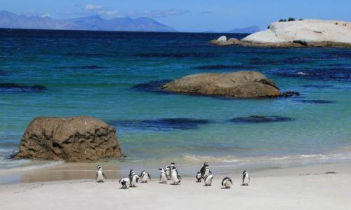Zdjęcie RPA / Kraj Przylądkowy / Boulders Beach / Pingwiny afrykańskie na plaży