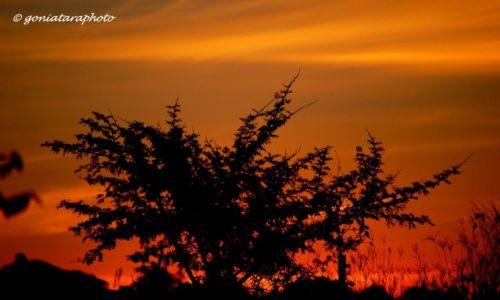 Zdjęcie RPA / Gauteng / Johannesburg / Mój codzienny wieczorny