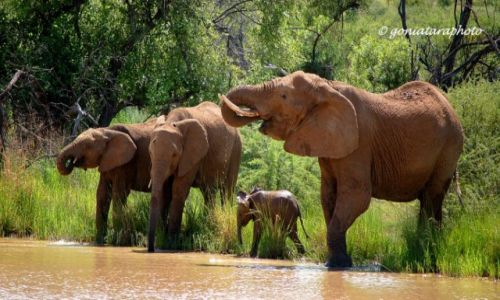 Zdjęcie RPA / North West / Pilanesberg National Park / Przy wodopoju.