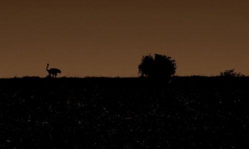 Zdjęcie RPA /  w drodze / Port Elizabeth / strus pedziwiatr...