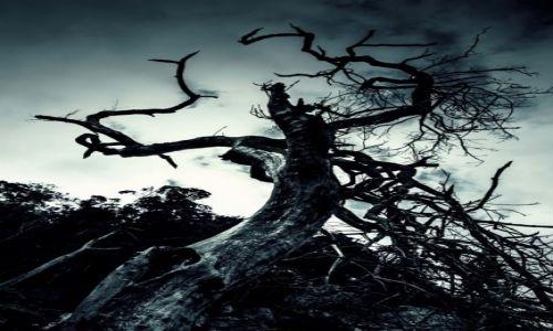 Zdjecie RPA / Park Narodowy Tsitsikamma / Storms River / Obumar�e drzewo