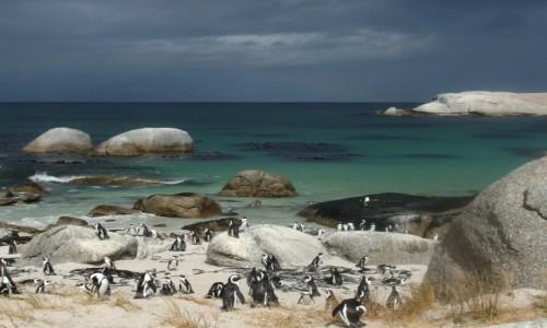 Zdjęcie RPA / - / simonstand / pingwinki afrykańskie