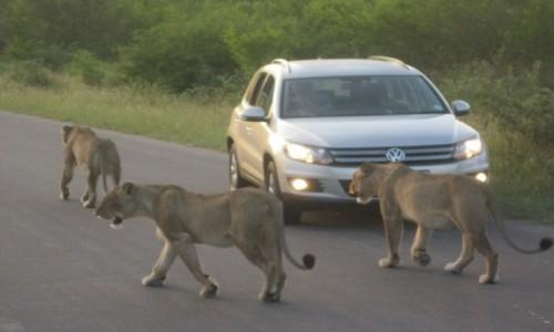Zdjęcie RPA / R.P.A. / R.P.A. / Park Narodowy Krugera   KONKURS