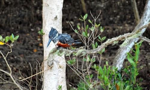 Zdjęcie RPA / - / Saint Lucia / Ptaszek