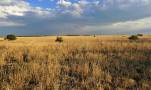 RPA / NW Afryka / Barberspan Bird Sanctuary / Nadchodzi pora deszczowa