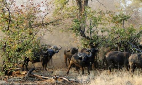 Zdjecie RPA / Pół - wsch. RPA  / Park Narodowy Krugera / Furia