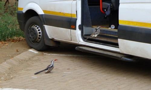 Zdjecie RPA / Prowincja Mpumalanga/  Pół - wsch. RPA  / Parking przy