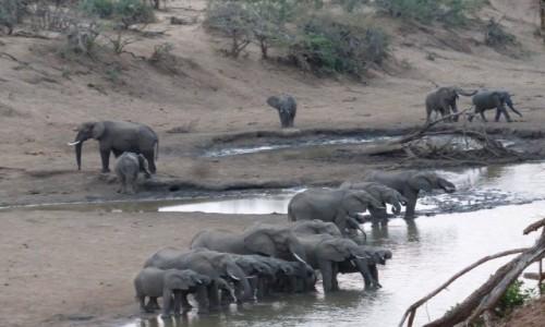 Zdjecie RPA / Pół - wsch. RPA  / Park Narodowy Krugera / Przetrwać porę suchą