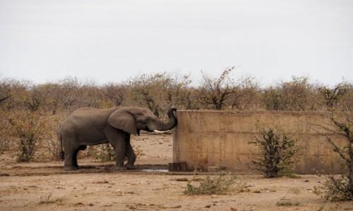 Zdjecie RPA / Pół - wsch. RPA  / Park Narodowy Krugera / Pomoc człowieka