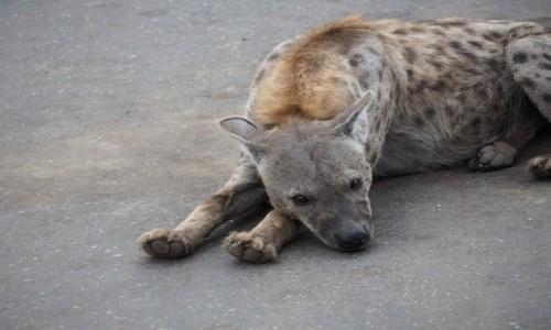 Zdjecie RPA / Pół - wsch. RPA  / Park Narodowy Krugera / Nic się nie dzieje ciekawego