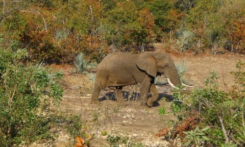 Zdjecie RPA / Pół - wsch. RPA  / Park Narodowy Krugera / Słoń na łonie natury