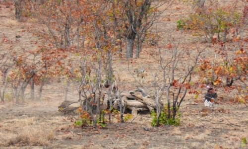 Zdjecie RPA / Pół - wsch. RPA  / Park Narodowy Krugera / Jedz lub bądź zjedzonym