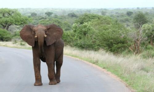 Zdjecie RPA / Park Krugera / Park Krugera / chwila przed szarżą