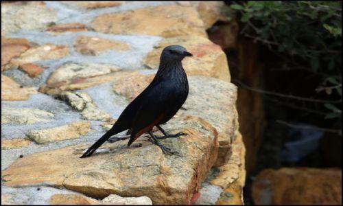 Zdjęcie RPA / Przylądek dobrej nadziei / Cape Point / czarne piękności
